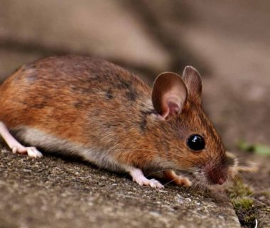 How Google Makes Use Of Evidence Of Mice To Develop Greater